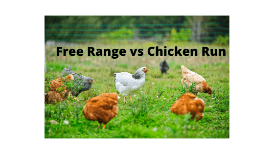 free Range vs Chicken Run Chicken Farming