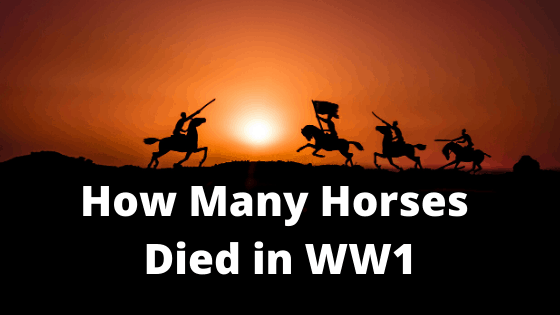 How Many Horses Died in WW1