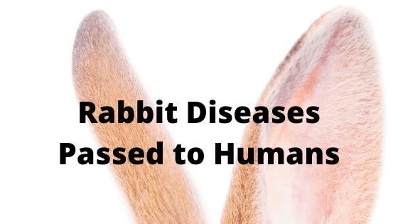 Rabbit Diseases Passed to Humans