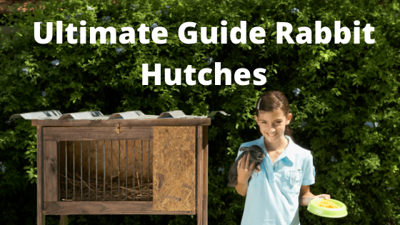 Ultimate Guide to Rabbit Hutches