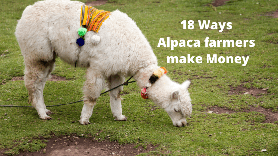 18 Ways Alpaca Farmers make Money