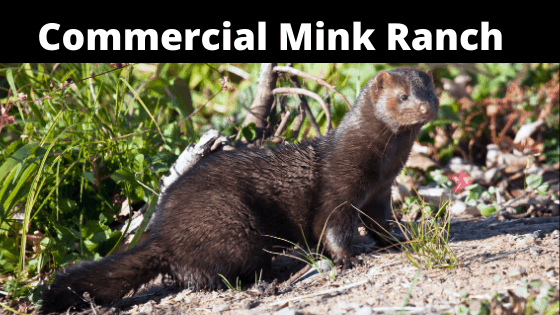 Commercial Mink Farm Ranch