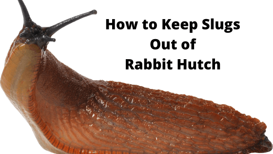 How to Keep Slugs Out of Your Rabbit Hutch