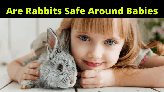Are Rabbits safe Around Babies