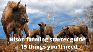 Bison farming starter guide_ 15 things you'll need
