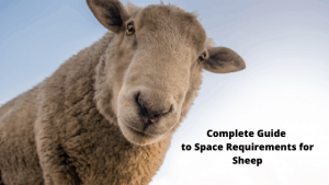 Complete Guide to Space Requirements for Sheep