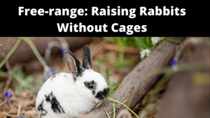 Free-range and Free-Roaming_ Raising rabbits Without Cages