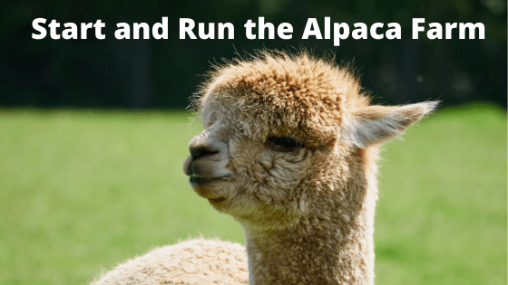 Start and Run the Alpaca Farm