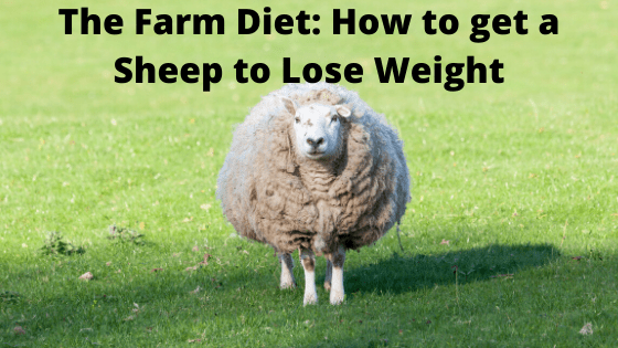 The Farm Diet_ How to get a Sheep to Lose Weight