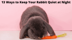 13 Ways to Keep Your Rabbit Quiet at Night