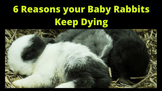 6 Reasons your Baby Rabbits Keep Dying