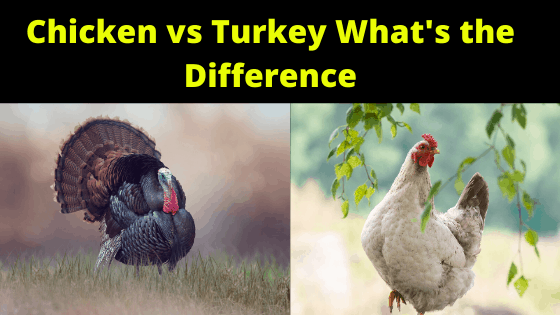 Chicken vs Turkey What's the Difference