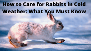 How to Care for Rabbits in Cold Weather_ What You Must Know