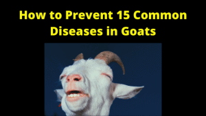 How to Prevent 15 Common Diseases in Goats