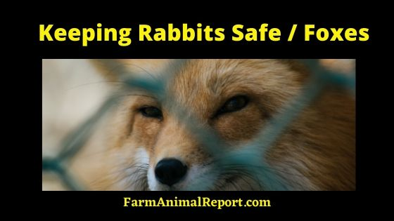 Keeping Rabbits Safe from Foxes