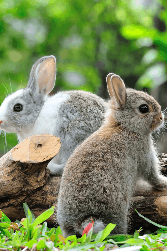How to Care for Rabbits in the Cold - 14 Steps 5