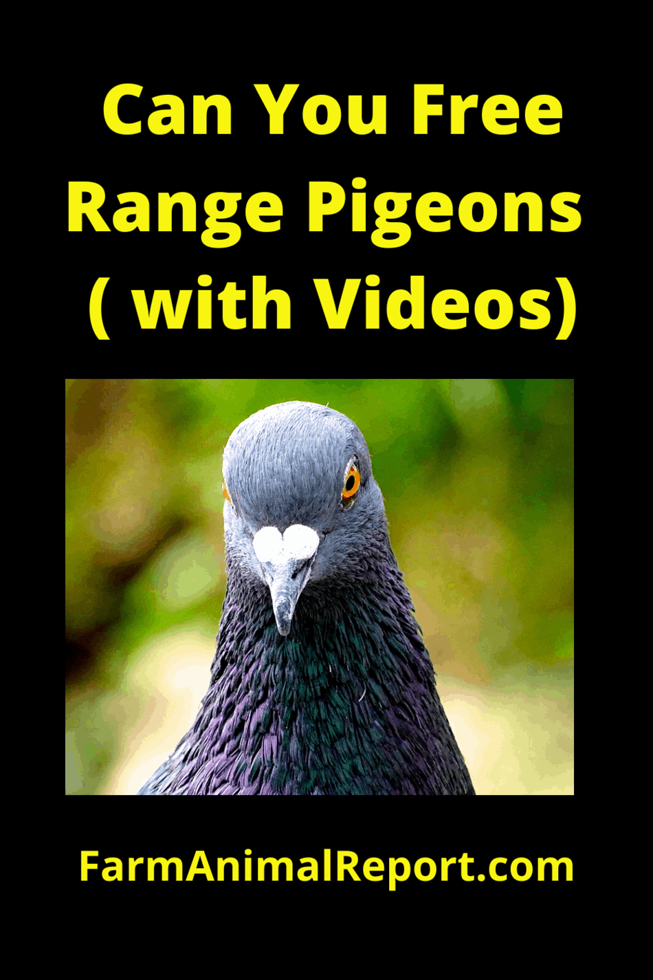 Can You Free Range Pigeons – (with Videos)