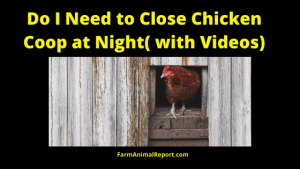 Do I Need To Close Chicken Coop at night