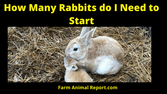 How to Start a Rabbit farm