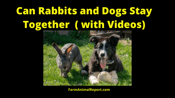 Rabbits and Dogs together