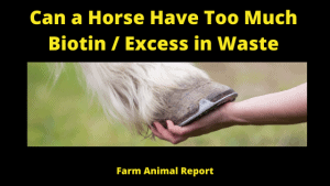 Can a Horse Have Too Much Biotin _ Excess in Waste