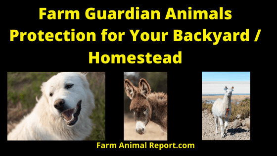 Farm Guardian Animals