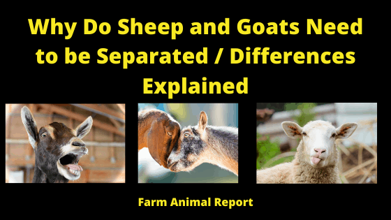 Separating Sheep and Goats