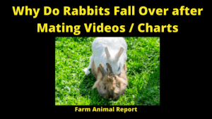 Why Do Rabbits Fall Over After Mating