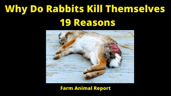 Why Do Rabbits Kill Themselves