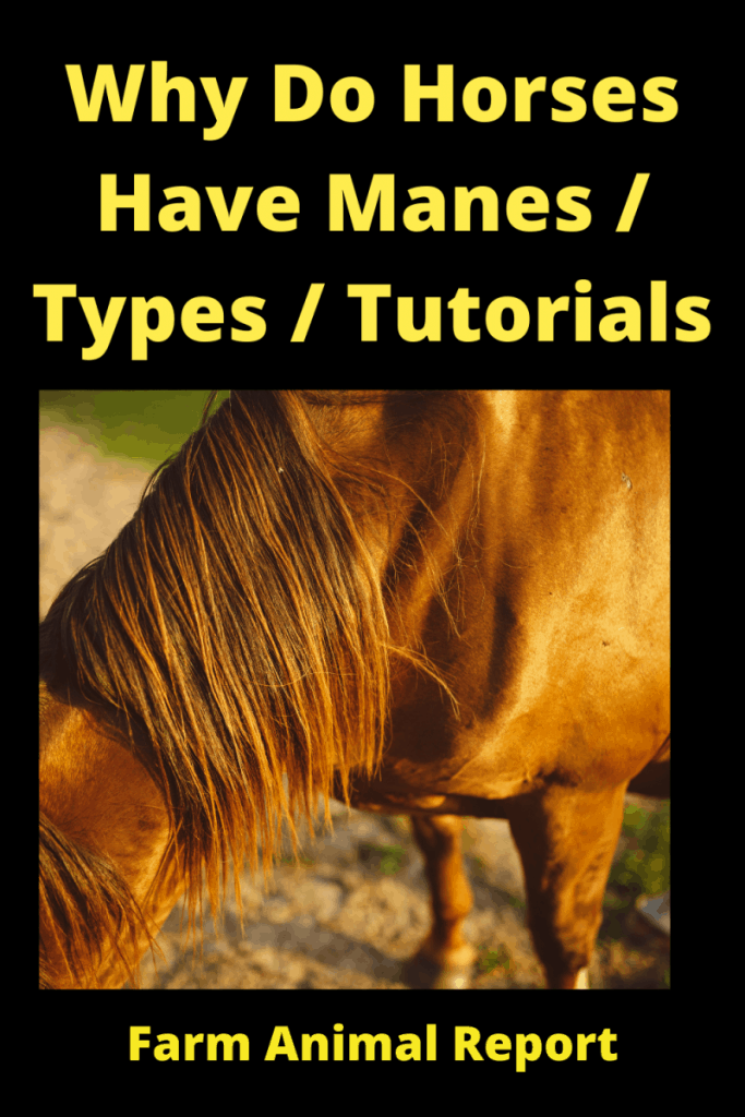 f Why Do Horses Have Manes _ Types _ Tutorials