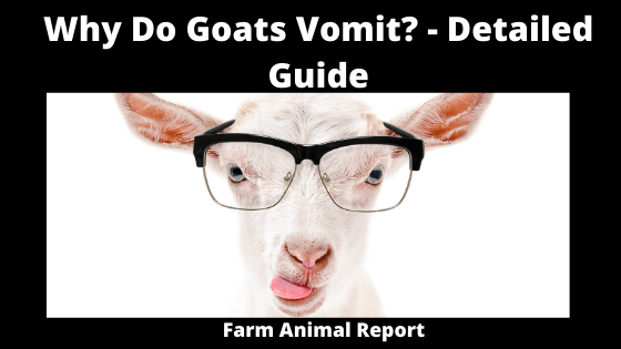Why Do Goats Vomit_ - Detailed Guide (1)