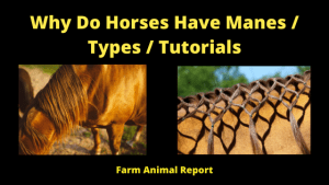 Why Do Horses Have Manes _ Types _ Tutorials