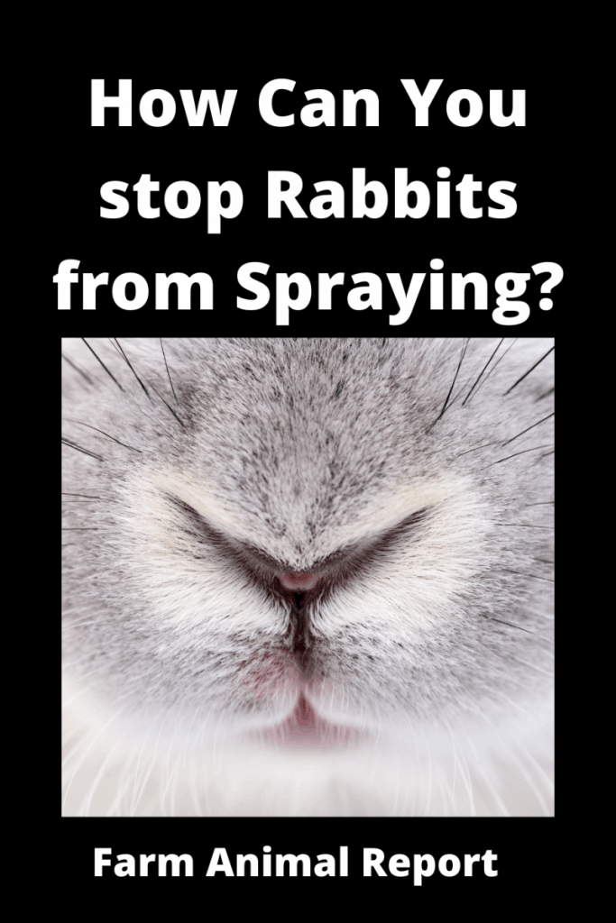 How Can You Stop Rabbits from Spraying? 6 Solutions 2