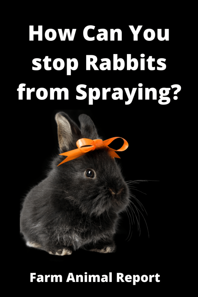 How Can You Stop Rabbits from Spraying? 6 Solutions 1