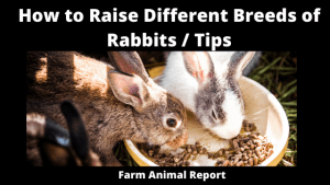How to Raise Different Breeds of Rabbits _ Tips