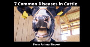 7 Common Diseases in Cattle