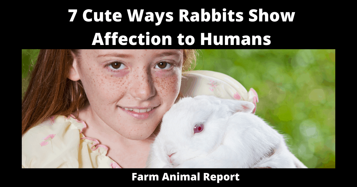 7 Cute Ways Rabbits Show Affection to Humans