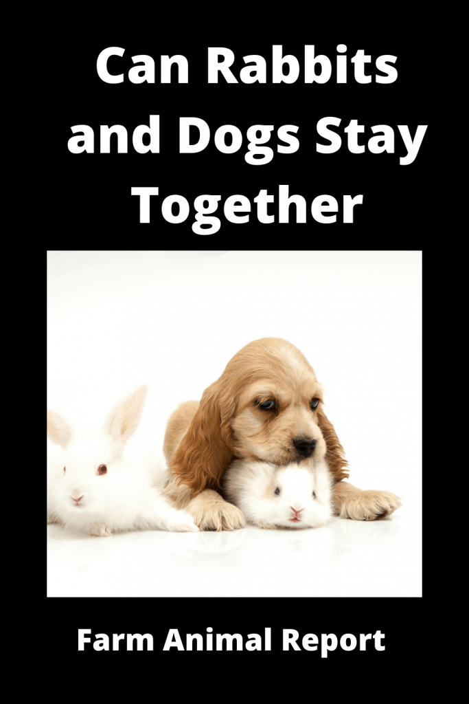 Can Rabbits and Dogs Stay Together (with 6 Videos) 4