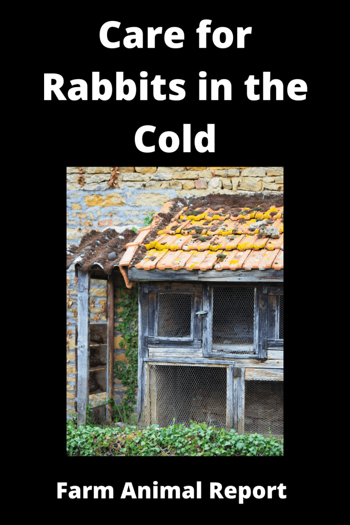 How to Care for Rabbits in the Cold - 14 Steps 3