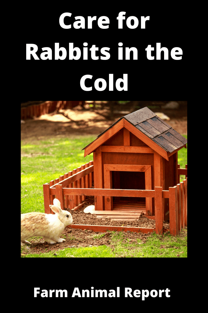 How to Care for Rabbits in the Cold - 14 Steps 4