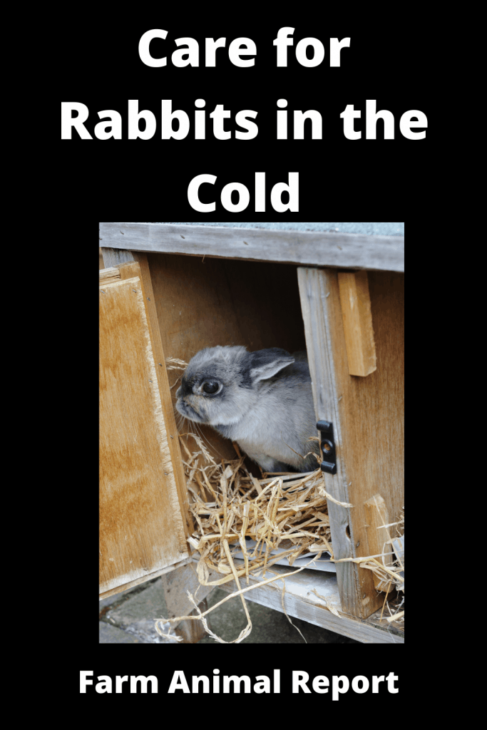How to Care for Rabbits in the Cold - 14 Steps 6