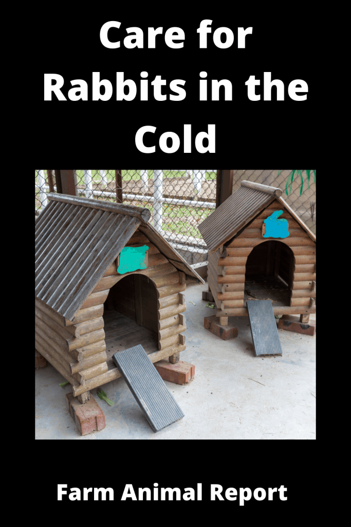 How to Care for Rabbits in the Cold - 14 Steps 1