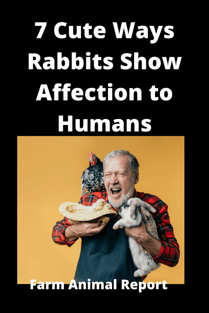 7 Cute Ways Rabbits Show Affection to Humans 1