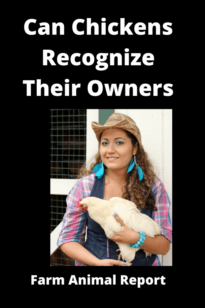 Can Chickens Recognize Their Owners 2