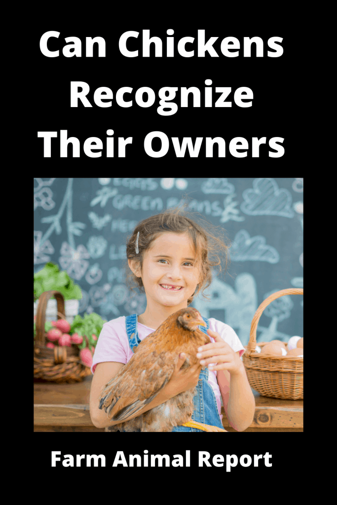 Can Chickens Recognize Their Owners 1