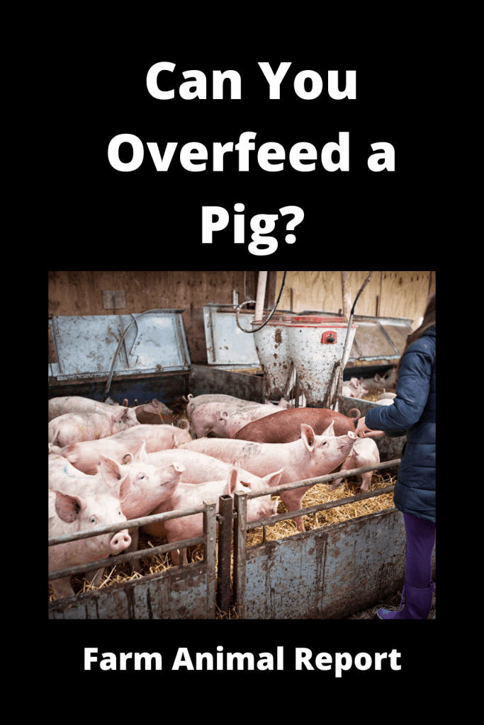 Can You Overfeed a Pig? 1
