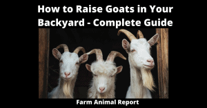 How to Raise Goats in Your Backyard - Complete Guide