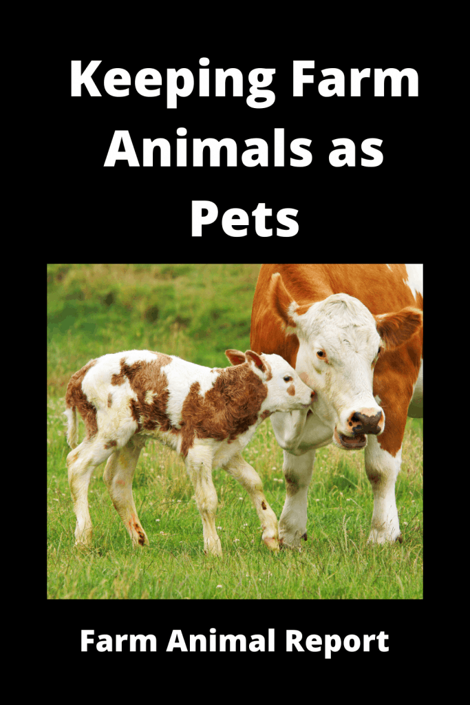 Keeping Farm Animals as Pets 4