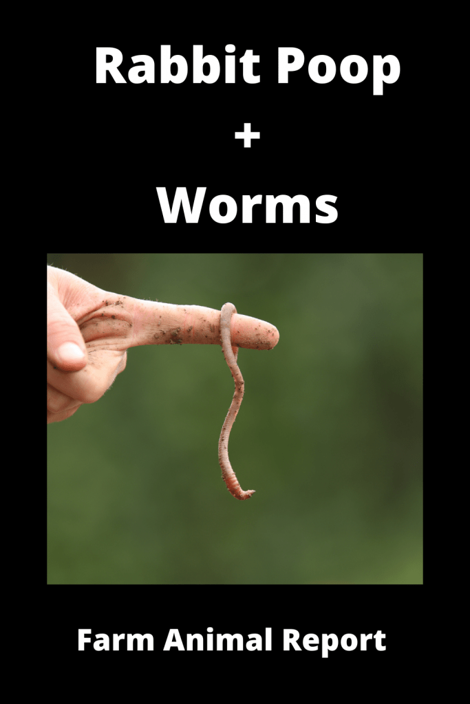 Rabbit Poop / Worms Ultimate Guide 2