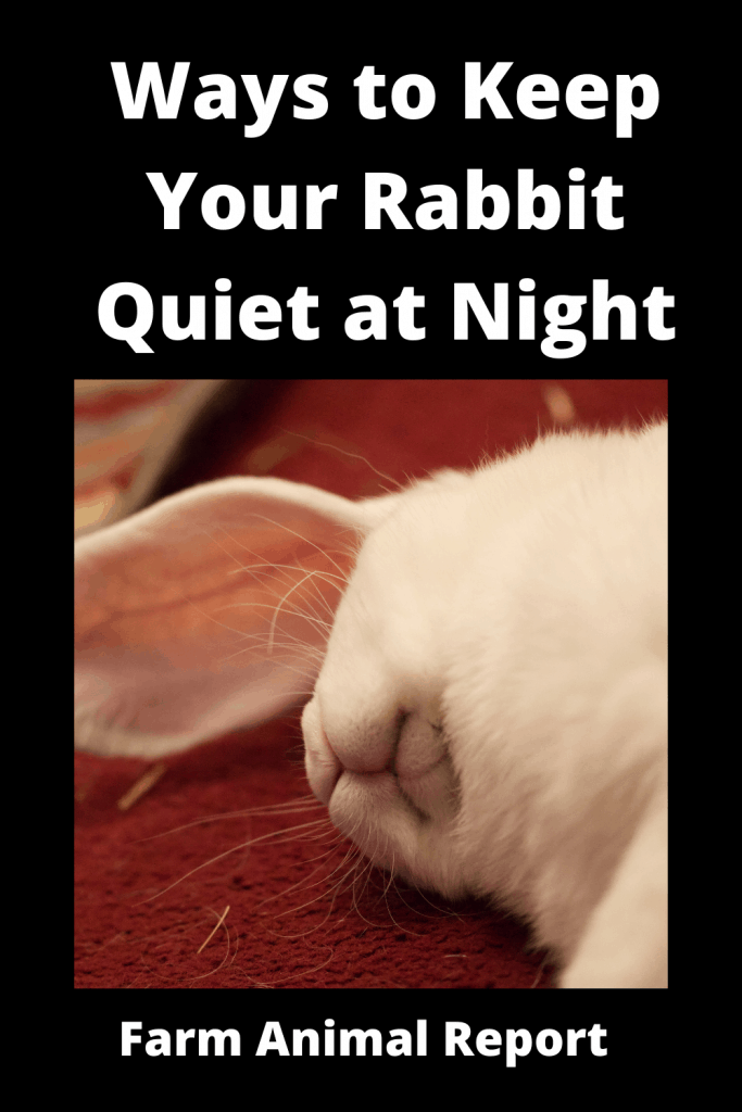 13 Ways to Keep Your Rabbit Quiet at Night 2